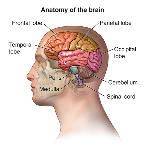 Magnetic Resonance Imaging (MRI) of the Spine and Brain