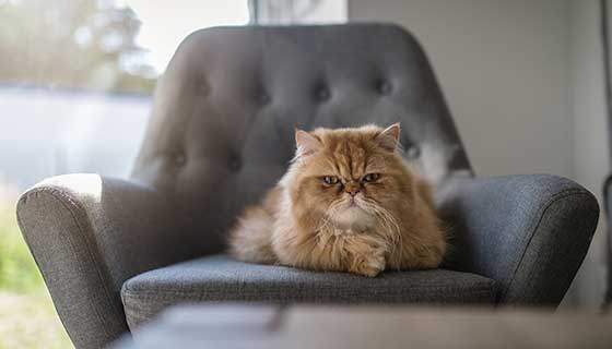 old cat sitting on chair