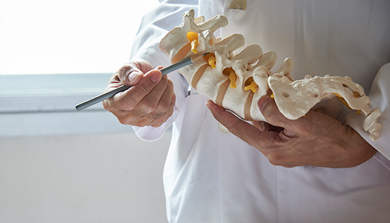 Doctor pointing to model of spine