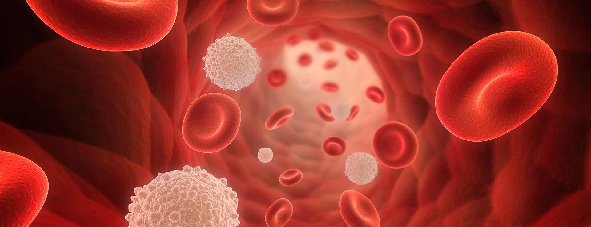Rendering of red and white blood cells