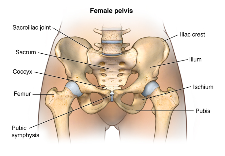 Anatomy of the female pelvis