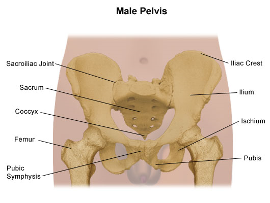 37+ Where is your pelvis located at ideas in 2021