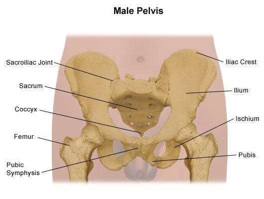 Pelvis    Problems   Johns Hopkins Medicine