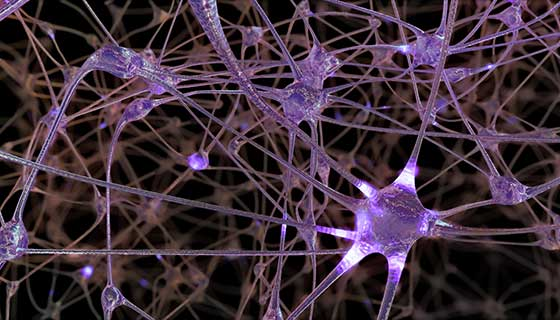 network of neuron cells in brain