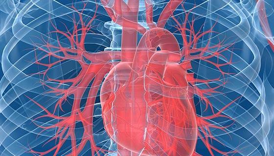 Heart and Vascular | Johns Hopkins Medicine