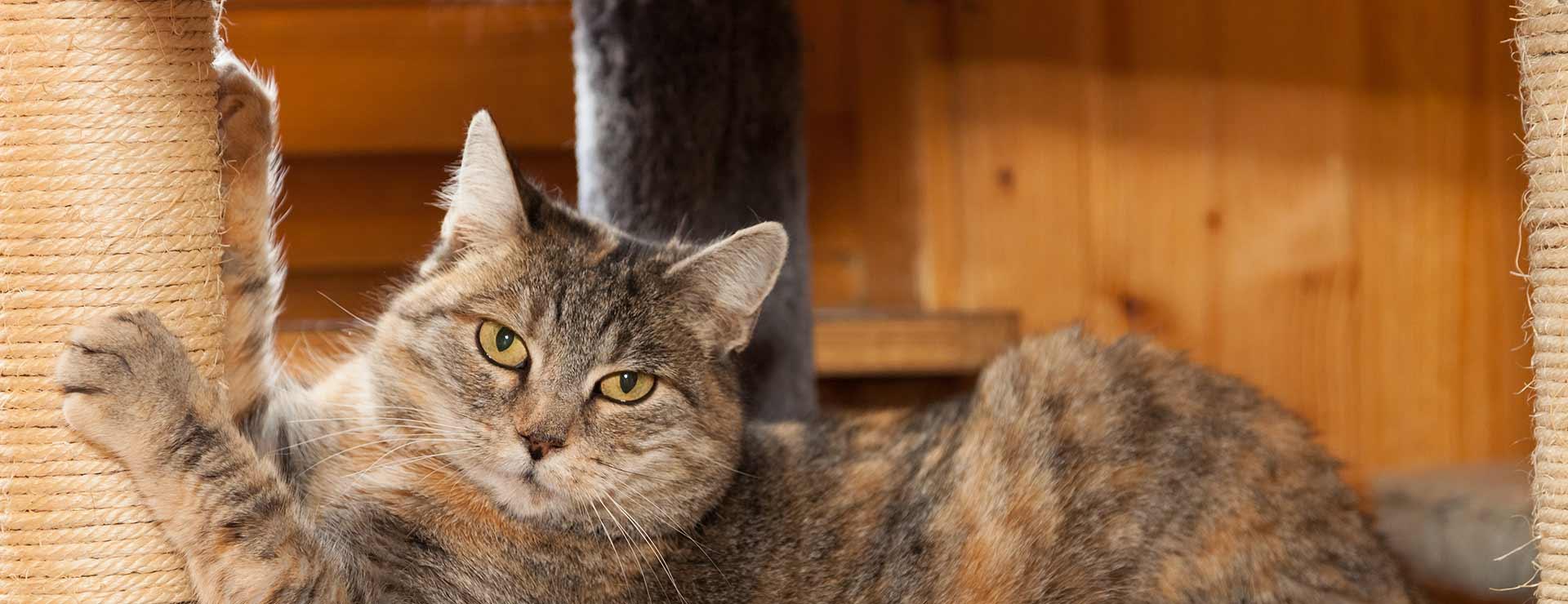 Cat Scratch Disease Johns Hopkins Medicine