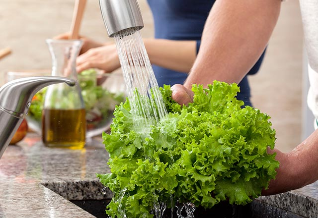 Washing lettuce under a faucet