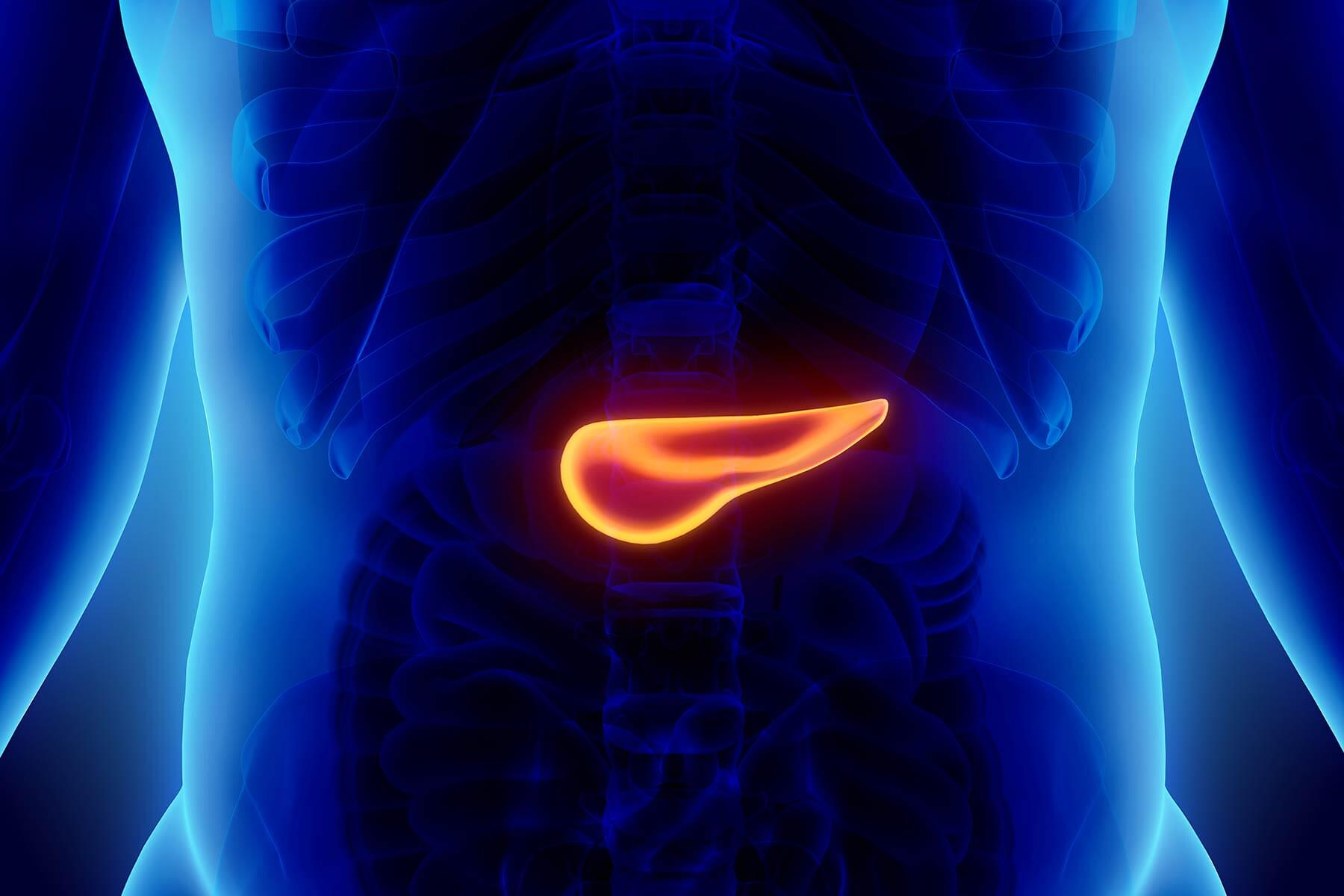 Scan of the abdomen and pancreas, showing where in the body patients would experience pancreatic cancer symptoms