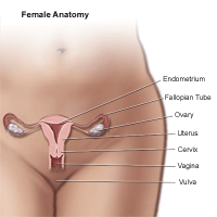 Illustration of the anatomy of the female pelvic area
