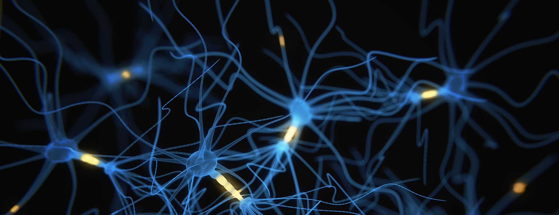 closeup image of neurons