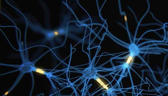 An illustration of neurons.