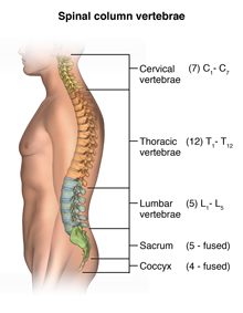 Computed Tomography (CT or CAT) Scan of the Spine | Johns