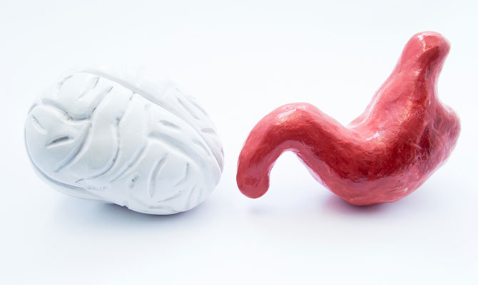 Clay models of brain and stomach