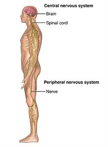 Spinal Cord Compression | Johns Hopkins Medicine
