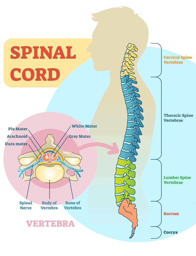 Spinal Cancer and Spinal Tumors | Johns Hopkins Medicine