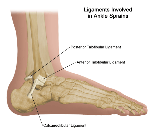 Ligaments Involved in Ankle Sprains