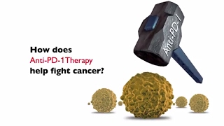 How Does AntiPD1 Therapy Help Fight Cancer