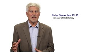 TomorrowsDiscoveries Cell Movement and HealthDr Peter Devreotes