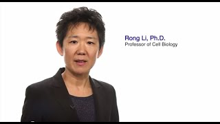 TomorrowsDiscoveries From Dysfunctional Cells to Disease  Dr Rong Li