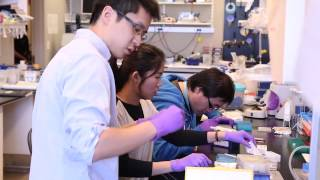 TomorrowsDiscoveries How Stem Cells May Treat Brain Injuries  Dr Hongjun Song
