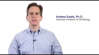 TomorrowsDiscoveries Stopping the Spread of Breast Cancer Cells  Andrew Ewald PhD