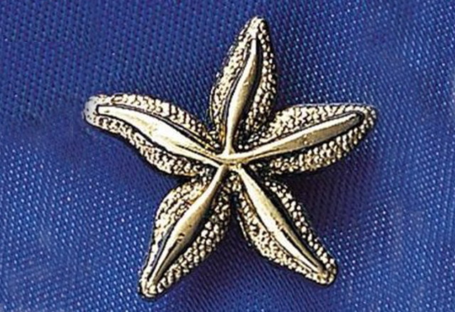 A starfish on a blue background.