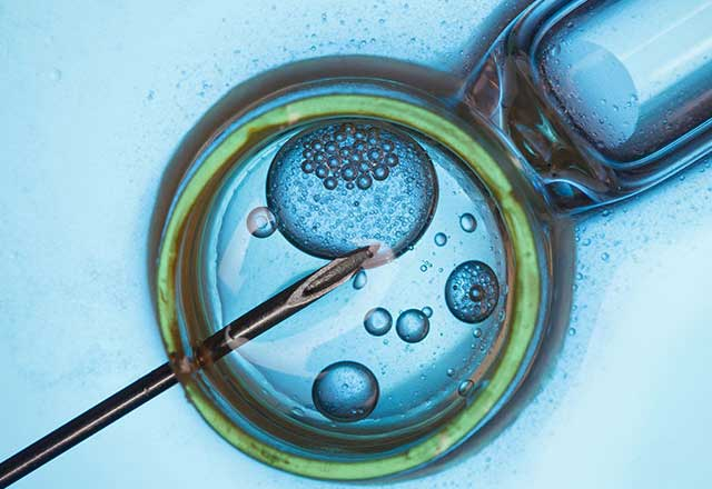 Close up on in vitro fertilization
