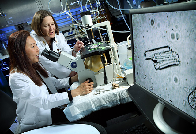 cardiac surgery research - Dr. Lawton in lab with researcher examining microscope