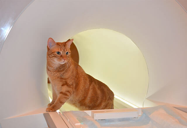 cat standing in front of a mri machine