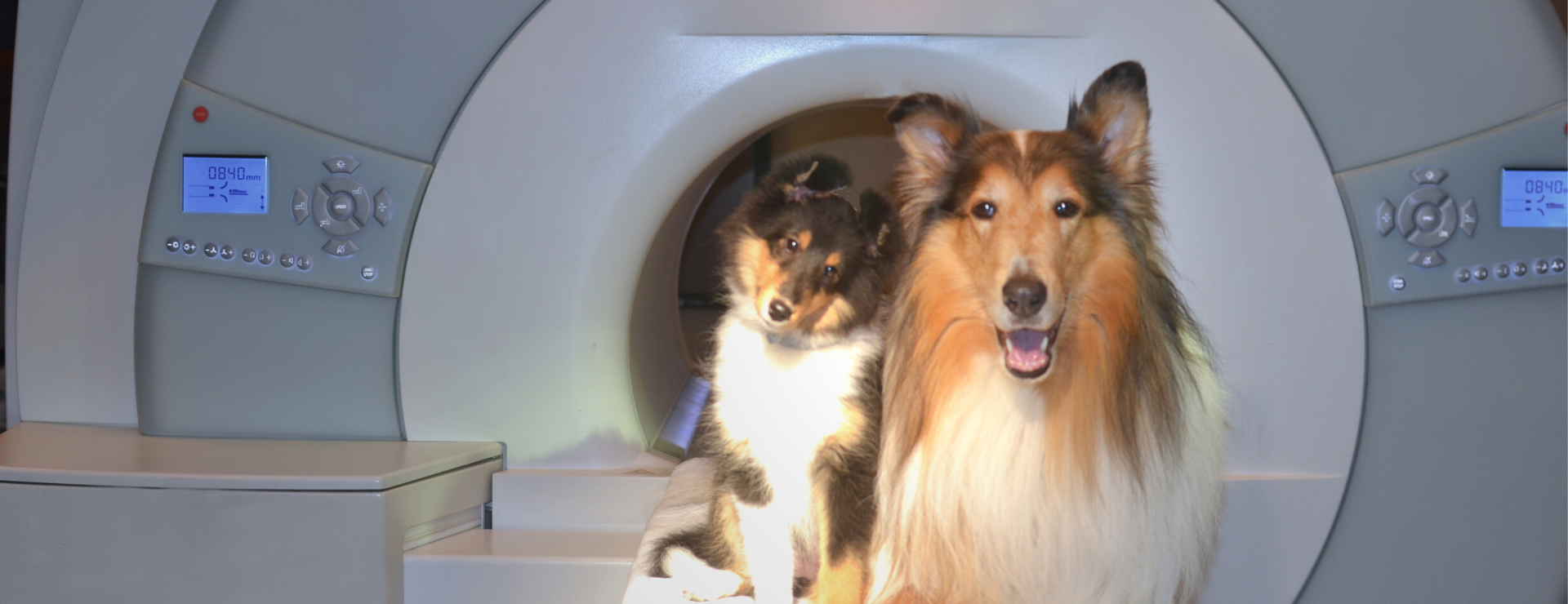 collie dog standing in front of a mri machine