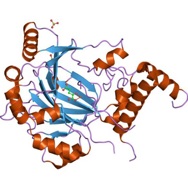 A structural representation of HIF-1.