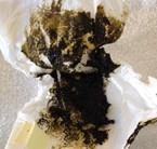 black poop