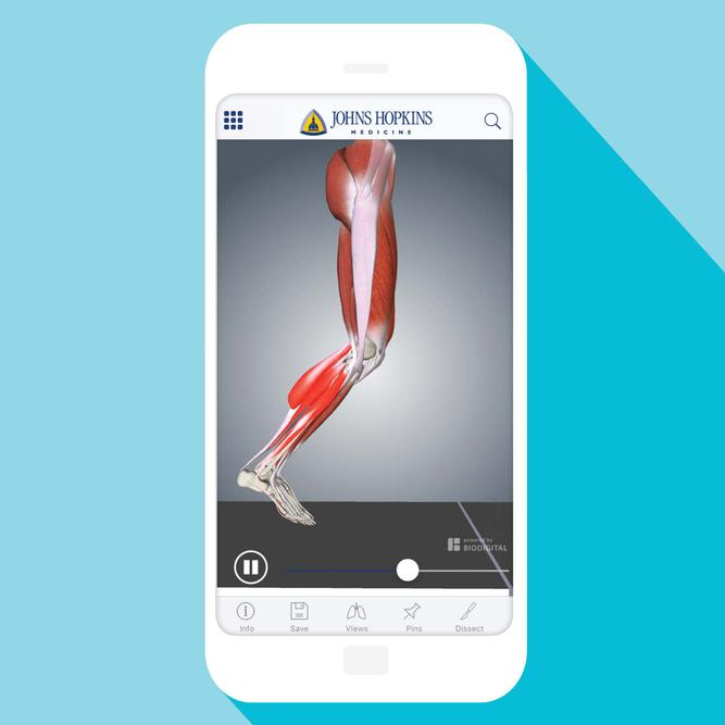 Anatomy App Offers Interactive Learning from Johns Hopkins Expert