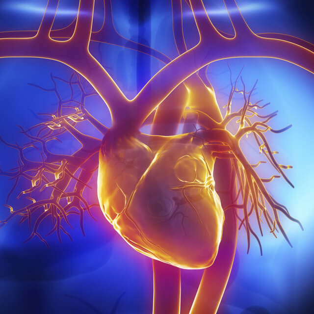 Lab Grown nerve Cells Make Heart Cells Throb