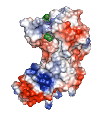 Structure of TB enzyme