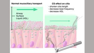 cilia and surface hydration