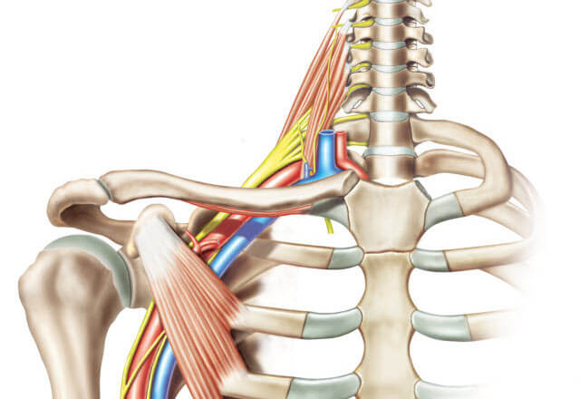 Conditions We Treat: Brachial Nerve Injury | Johns Hopkins