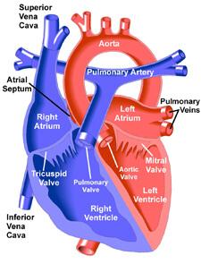 Pulmonary Valve Surgery