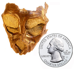 Image of a skull of a monkey fossil next to the a U.S. quarter