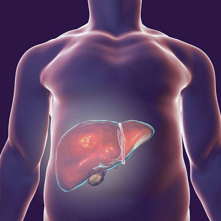 A graphic shows the liver in the body.