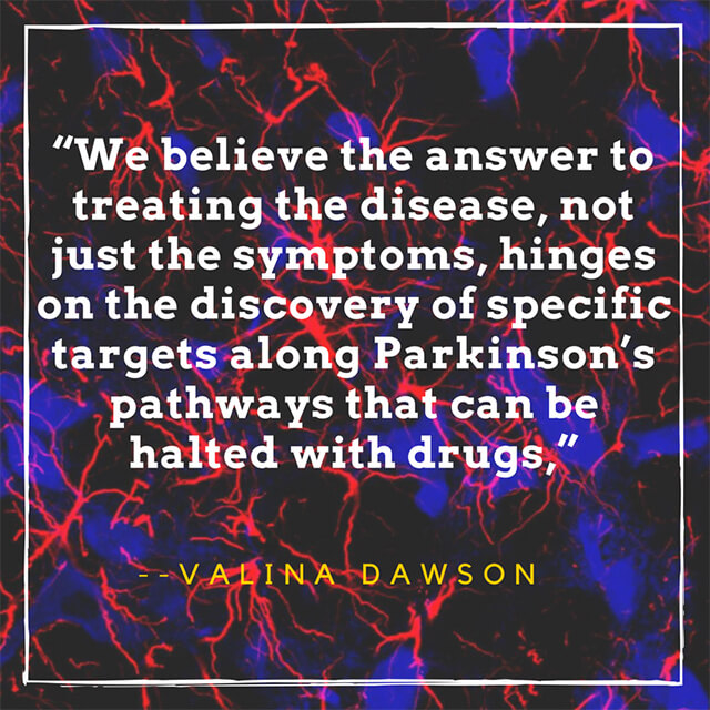 Targeting Brains Star Shaped Cells May >> The Power Couple Of Parkinson S Research