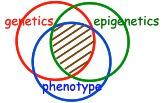 Genetics-epigenetics-phenotype