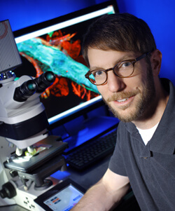 Despite earlier skepticism, fruit fly studies have gained traction, says Anthony Cammarato, and offer valuable molecular clues to correcting disease.
