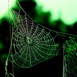 a spider web