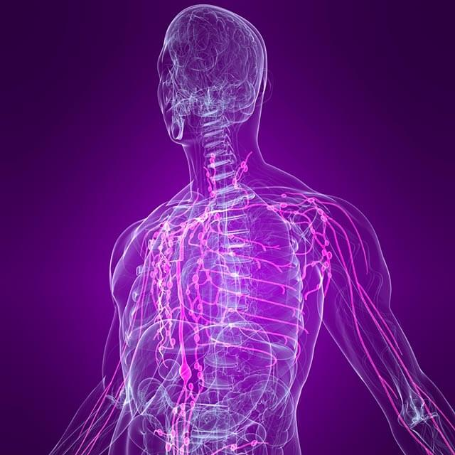 Illustration of the body's lymphatic system.