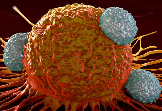 An illustration of immune cells