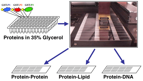 Yeast Proteome Chip A