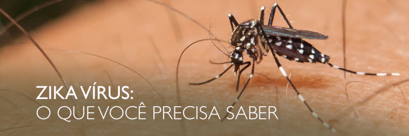 An Aedes aegypti mosquito, the mosquito responsible for transferring the Zika virus to humans