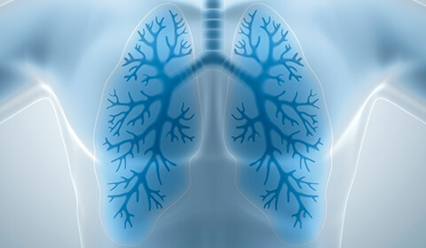 Illustrated lungs.