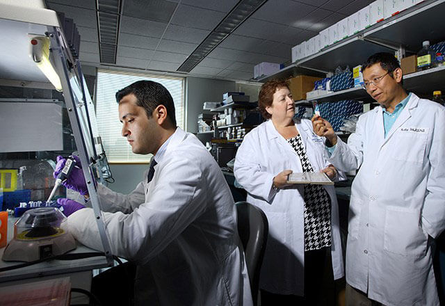 Cancer researchers working in the lab